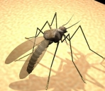 Mosquito Tiere  47